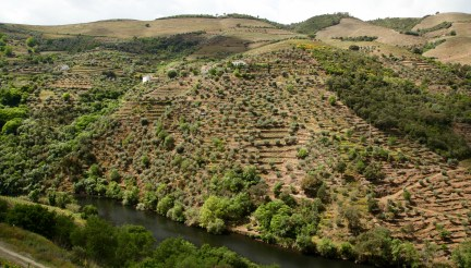 Quinta do Panascal vineyard views