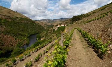 Quinta do Panascal vineyards