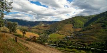 Douro Valley views of vineyard
