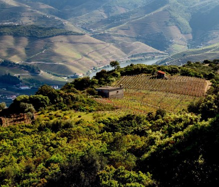 Douro Valley hilltop vineyard
