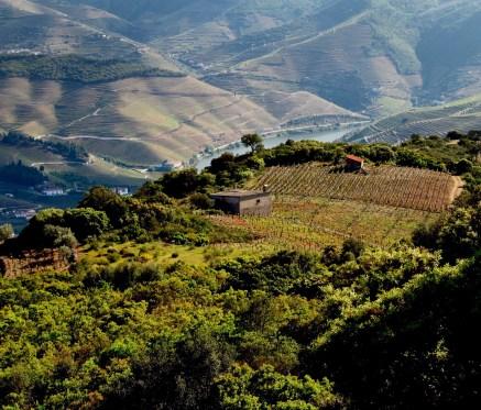 Douro Valley hilltop vineyard