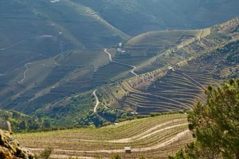 Douro Valley terraced slopes