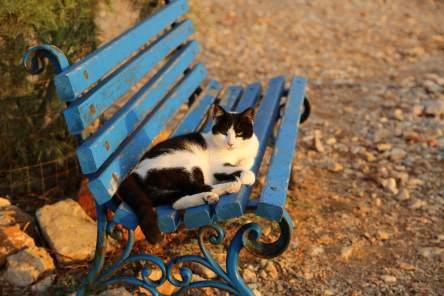 Folegandros cat sunrise