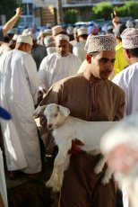 Nizwa baby goat auction