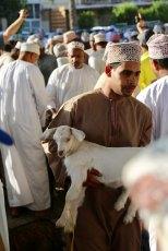 Nizwa baby goat auction