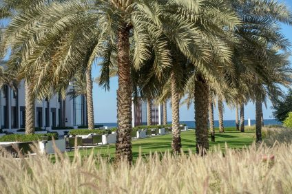 Chedi_Muscat palm trees