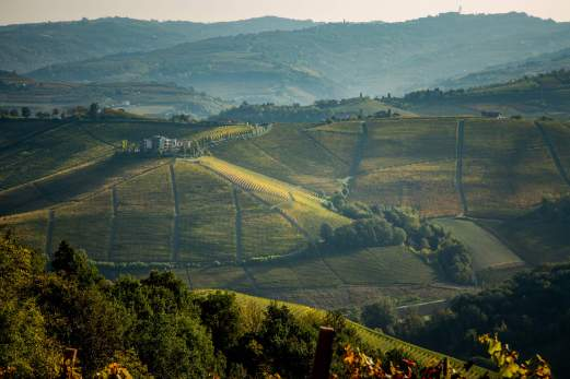 Ginestra hillstops in Autumn