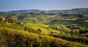 Barolo Italy vineyards