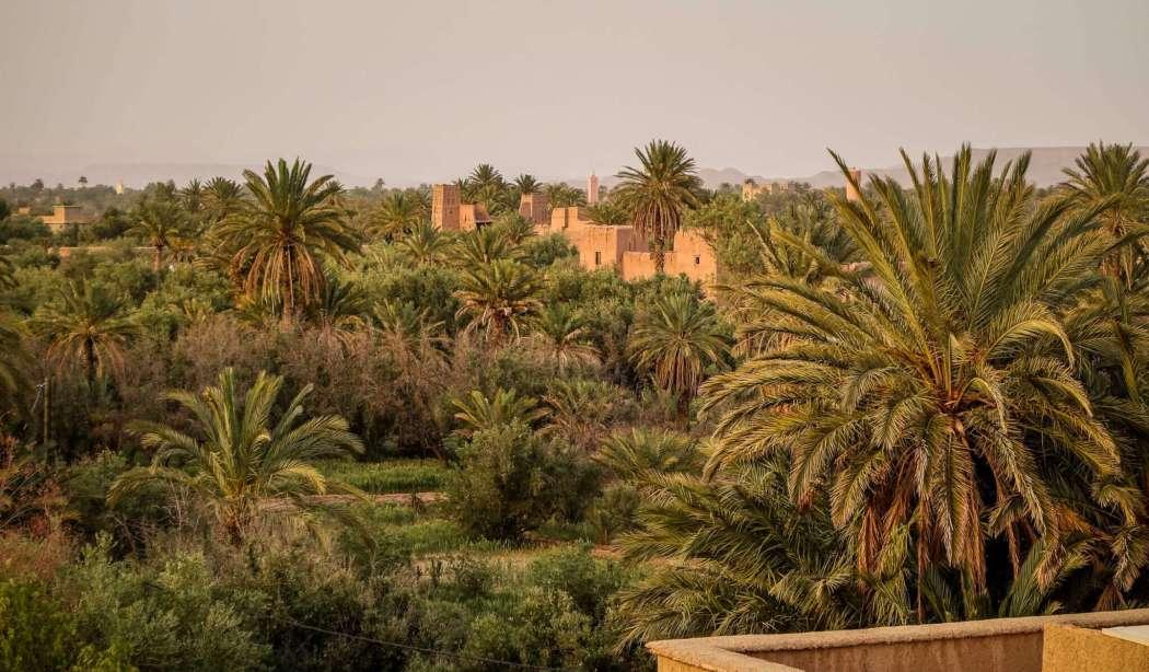 Skoura Kasbahs in palm grove