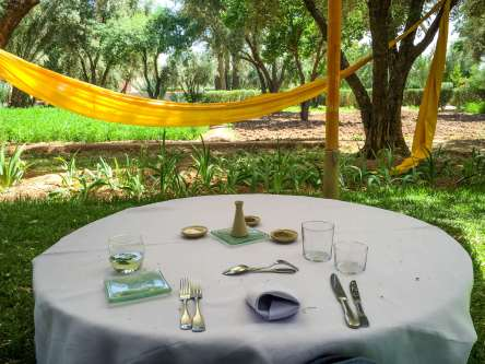Another lunch in the date palm grove.