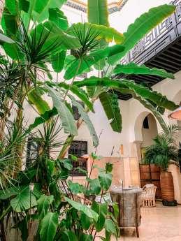 Riad 72 atrium trees