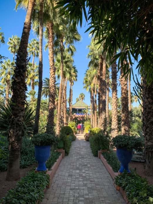 Jardin Majorelle palm trees