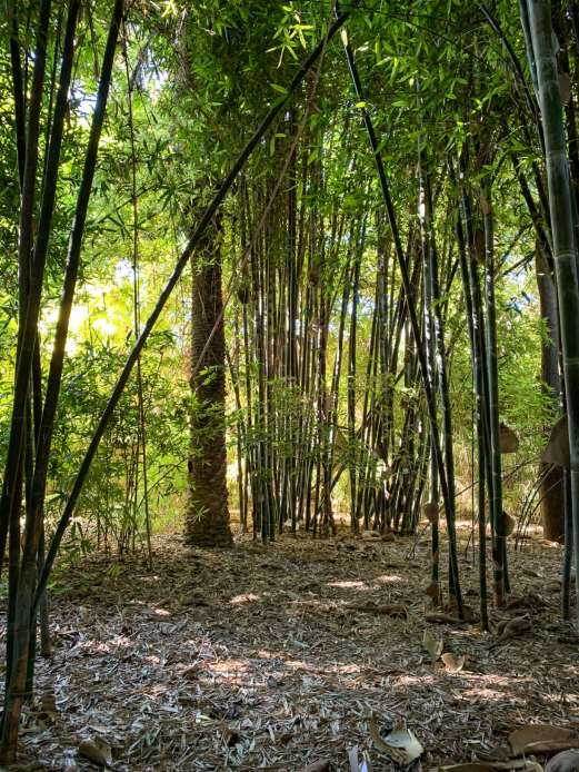 Jardin Majorelle bamboo
