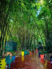 Jardin Majorelle bamboo alley