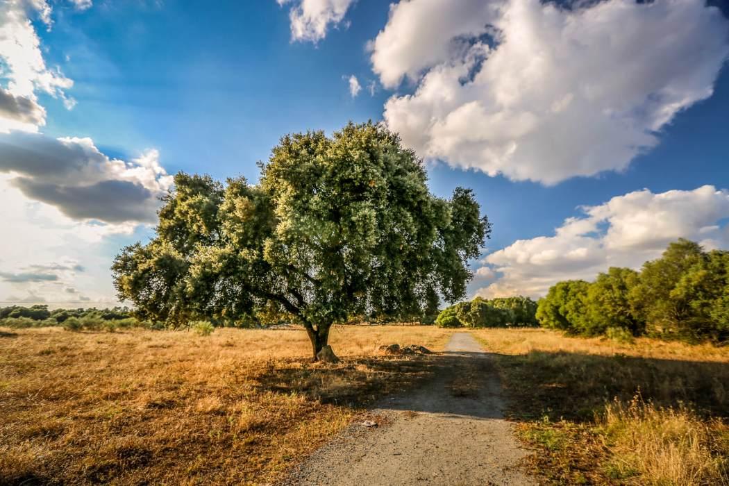 São Lourenço do Barrocal tree in sun