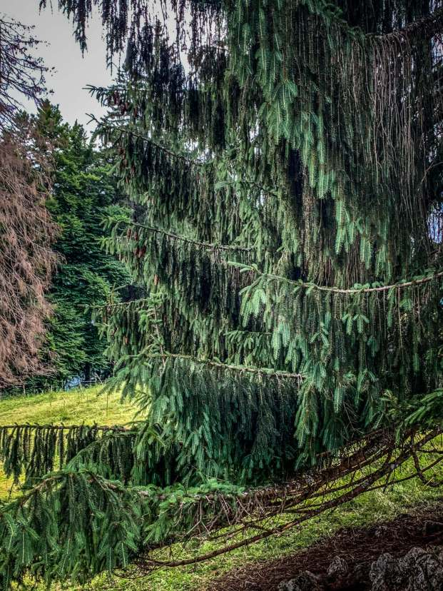 Elmauer Alm trees