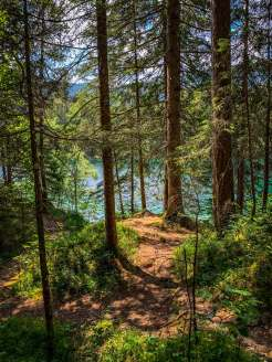 Trees around lake Eibsee