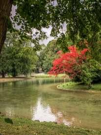 Englischer Garten red tree