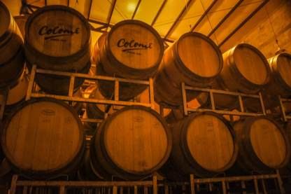 Estancia Colomé barrels in winery