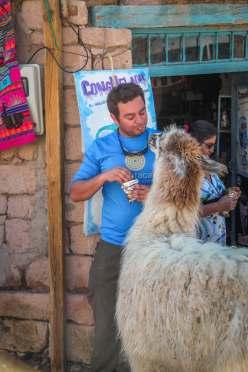 feeding llama Toconao