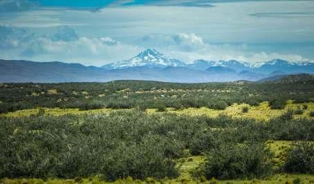 guanaco herd Torres del Paine