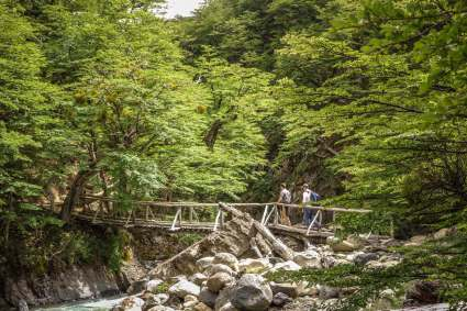 Bridge amongst trees Torres del Paine