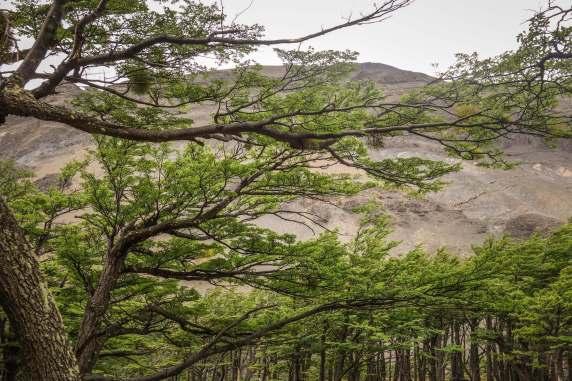 lena tree branches