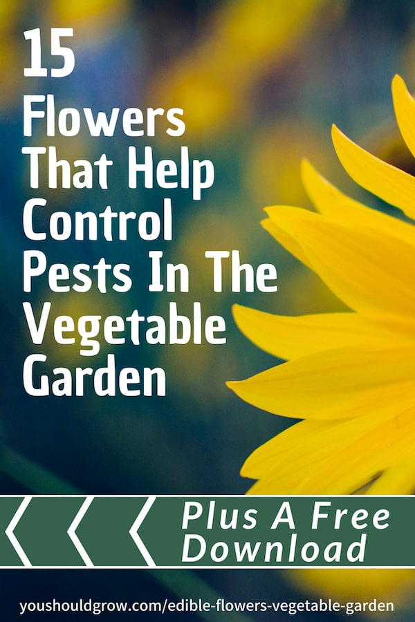 15 flowers that help control pests in the vegetable garden white text overlaying image of yellow flower petals and green/blue background