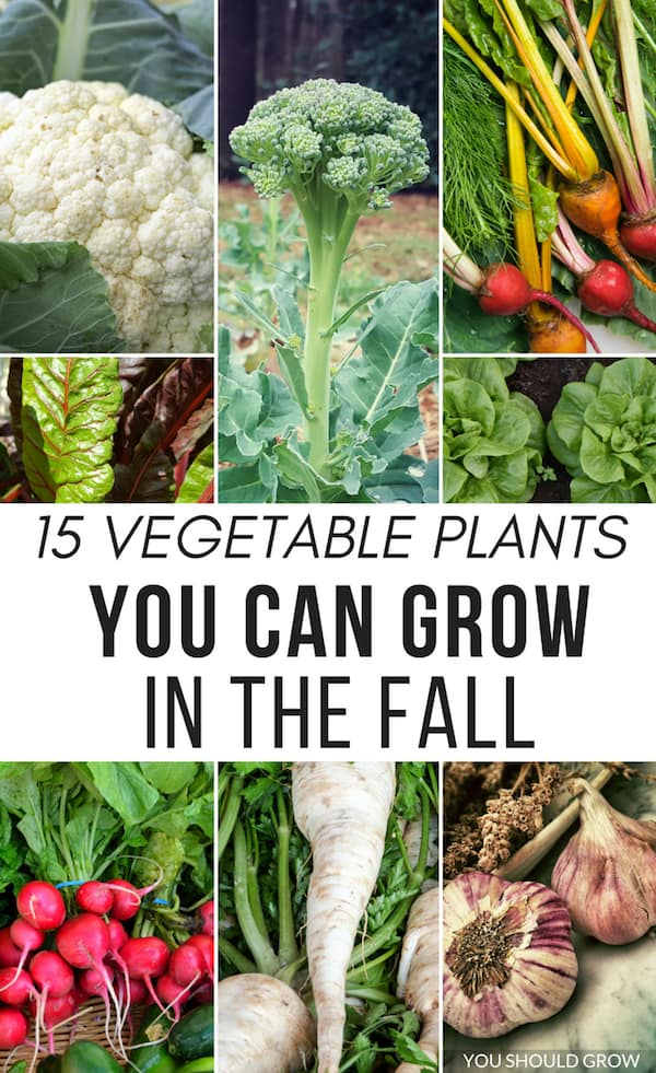 Top 9 Things To Do In Your Fall Garden | You Should Grow