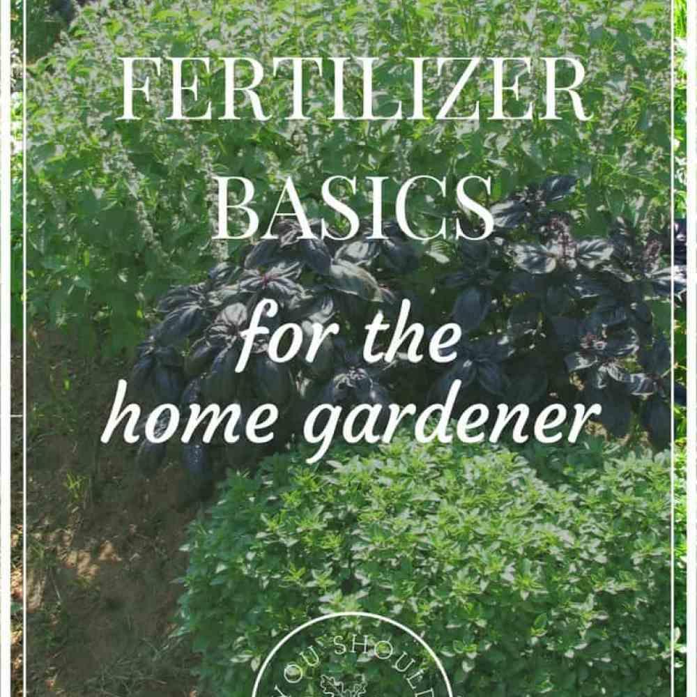 Choosing The Right Fertilizer For Your Veggie Garden