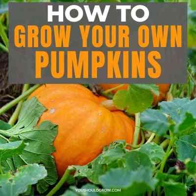 How To Grow Winter Squash & Pumpkins