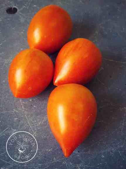 Garden Gem Tomato Beauties