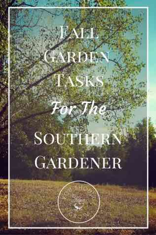Gardening in warm climates means mild, warm falls. Find out how this affects fall gardening tasks in this article. Fall Garden Tasks for the Southern Gardener at Youshouldgrow.com