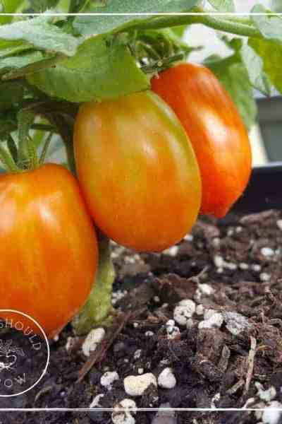 Three Secrets to Growing The Best Garden Ever