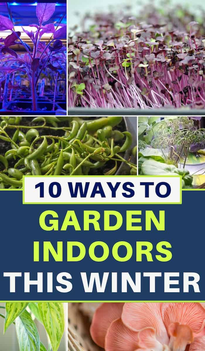Indoor garden ideas - 10 ways to garden indoors this winter