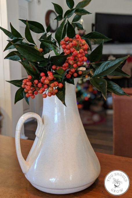 Simple Christmas Centerpiece idea - Nandina leaves and berries fill a white pitcher