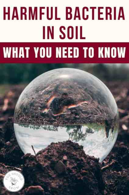 Text: harmful bacteria in soil. what you need to know. Image of clear sphere in garden soil.