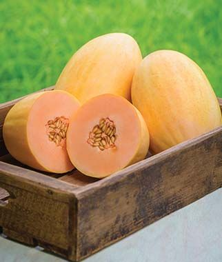 Mango hybrid melon has sweet pink flesh that is reminiscent of mango