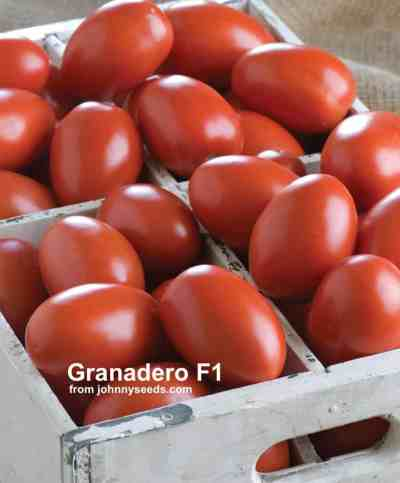 bunch of red granadero tomatoes in a white wood crate