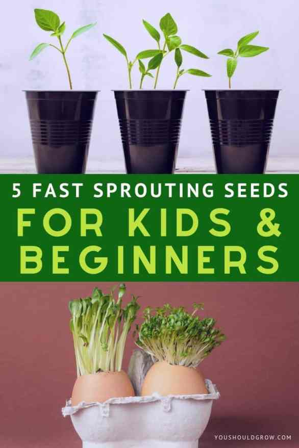 5 fast sprouting seeds for kids & beginners text overlay. on top: image of plants growing in black solo cups on bottom: image of sprouts growing out of eggshells