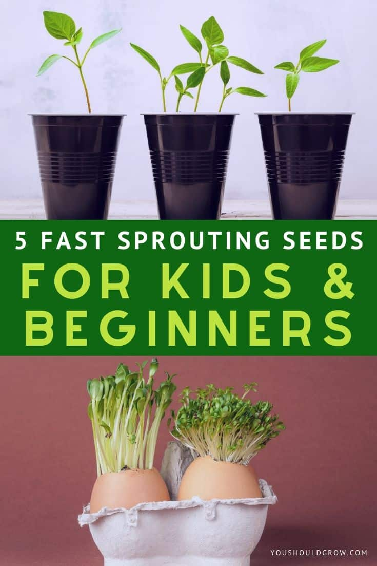 Looking for fast sprouting seeds for kids and beginners? Here are 5 super fast and easy to grow vegetables that will entertain and delight gardeners both young and old.