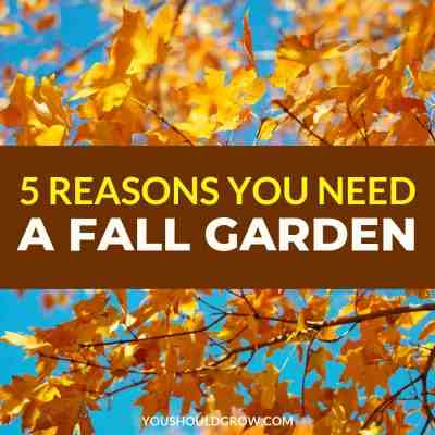 5 reasons you need a fall garden