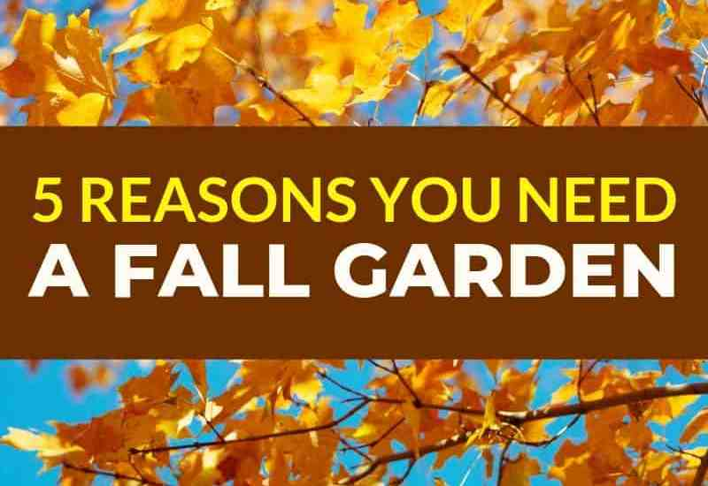 5 reasons you need a fall garden