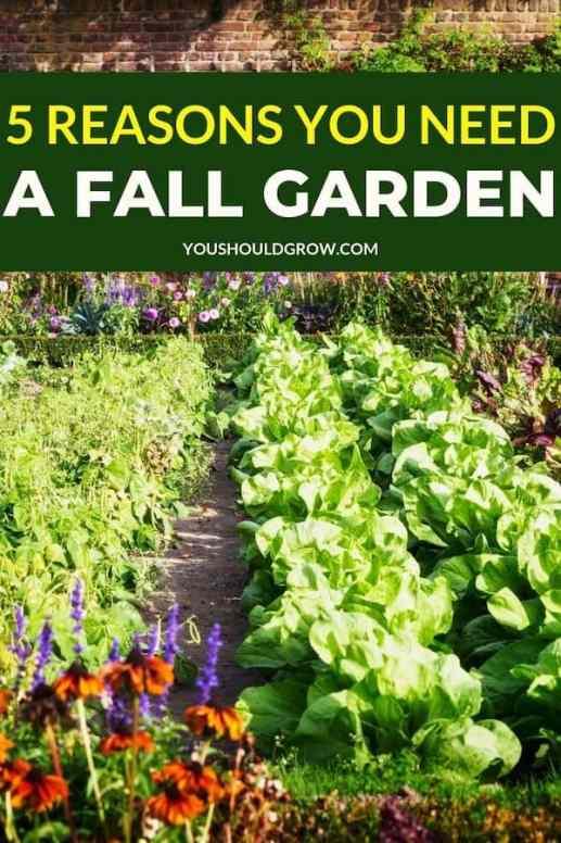 5 reasons you need a fall garden.