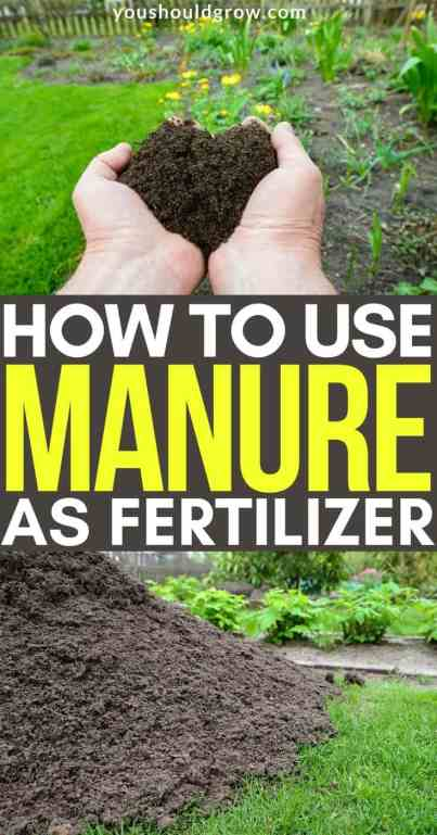 how to use manure as fertilizer pinterest pin