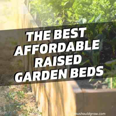 best raised garden bed featured image