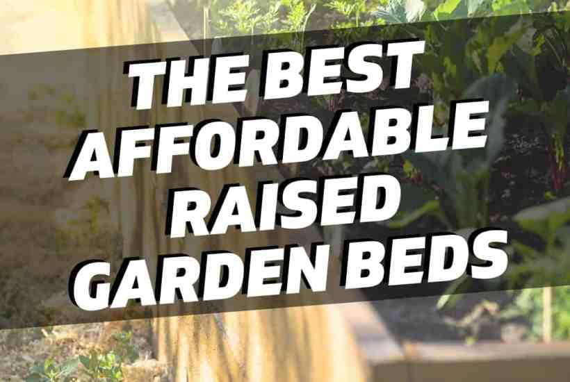 best raised garden bed featured image