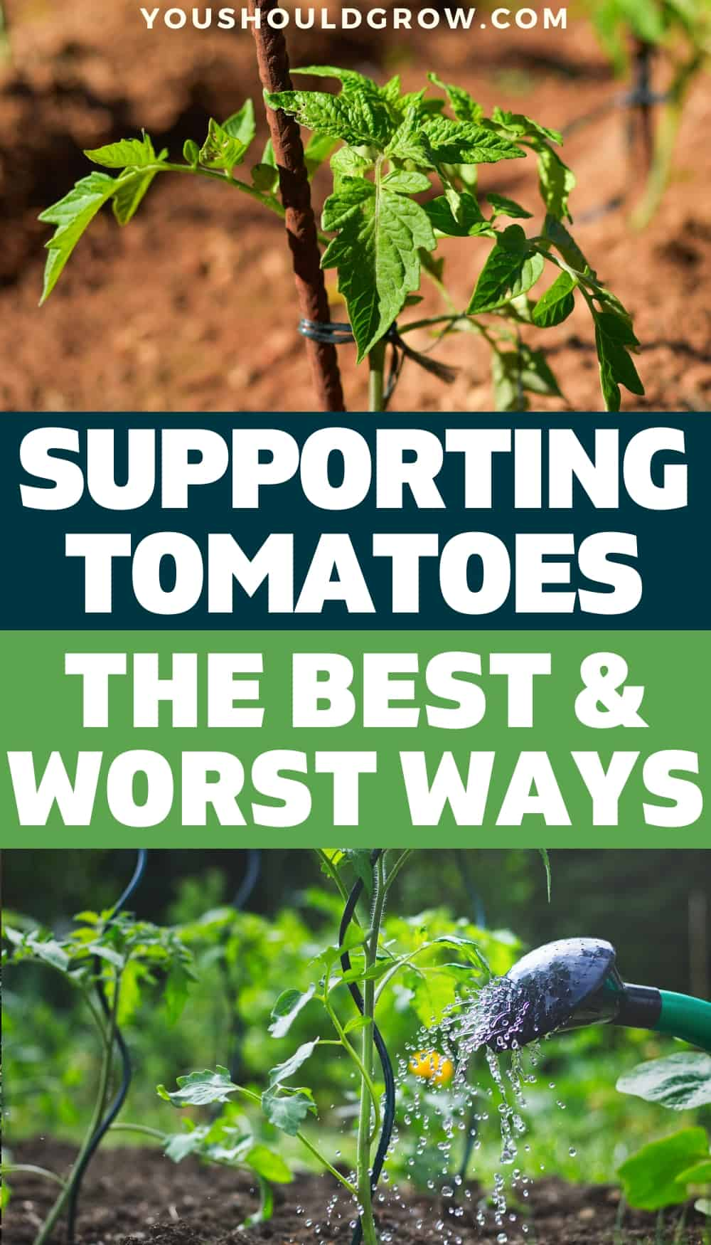 Growing tomatoes in your vegetable garden means you get to enjoy a summer full of your own organic tomatoes. Supporting tomatoes to keep them off the ground is the best way to keep healthy plants and get more tomatoes. Looking for tomato trellis ideas to try this season in your vegetable garden? Here are the best and worst ways to stake your tomato plants.
