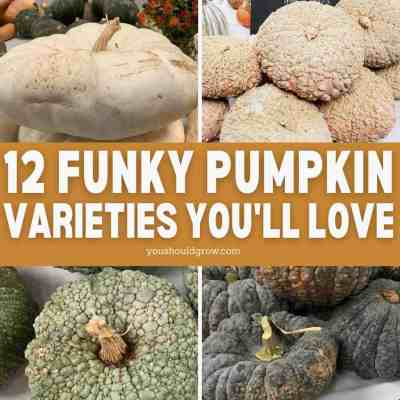 12 Funky Pumpkin Varieties You'll Love