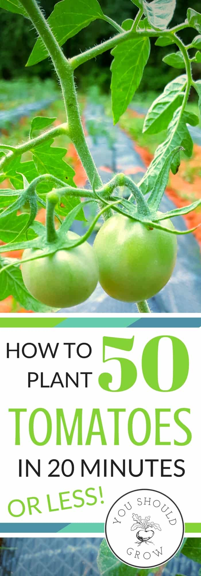 Find out the awesome tool we use to get 50 tomatoes in the ground in 20 minutes! Not only is it the fastest way to get plants in the garden, it will save you a lot of back and leg pain. Every gardener needs these amazing tools.